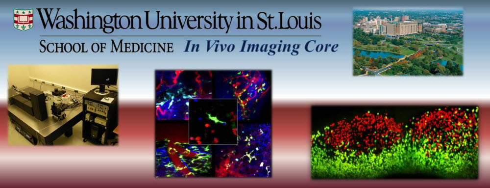 In Vivo Imaging Core